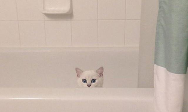Bu kedinin ünlülerden bile fazla takipçisi var!