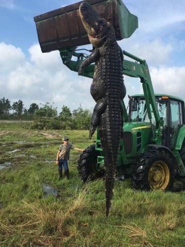7.5 metrelik canavar öldürüldü