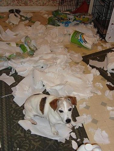 Evde yalnız kalan köpek ne yapar?