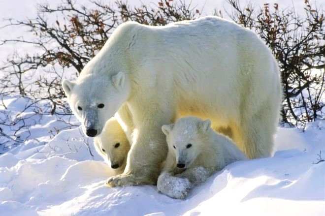 Hayvanlar Hakkında Bilinmesi Gereken Şaşırtıcı Bilgiler