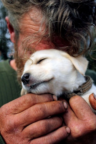 15 fotoğrafla evsiz insanların en sadık dostu köpekler