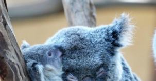 Annelik İçgüdüsünün Sadece İnsanlarda Olmadığını Kanıtlayan Hayvanlar ve Yavruları