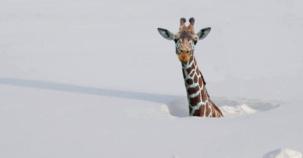 Hayvanların Kar İle Muhteşem Buluşması :)