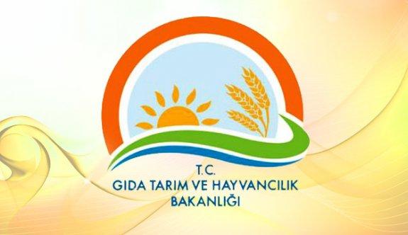 Gıda Tarım ve Hayvancılık Bakanlığı Yüksek Maaşla Sözleşmeli Personel Alıyor