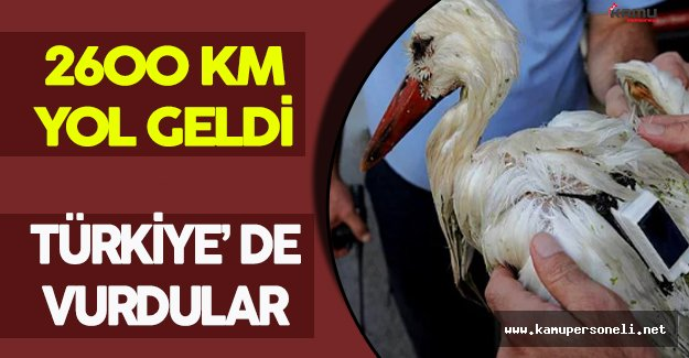 2600 KM Yol Geldi, Türkiye' de Vurdular
