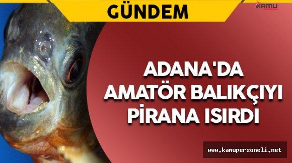 Adana'da Amatör Balıkçıyı Pirana Isırdı
