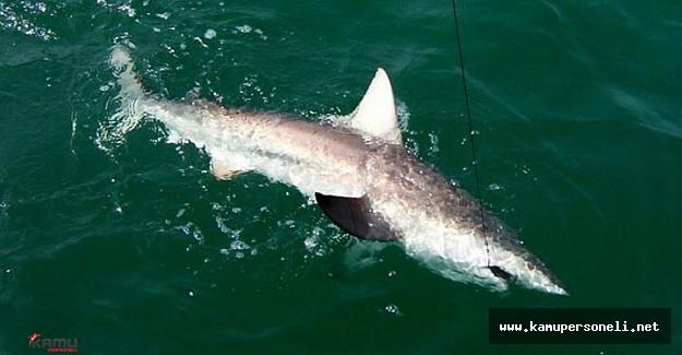Akdeniz'de Köpek Balığı Yakalandı