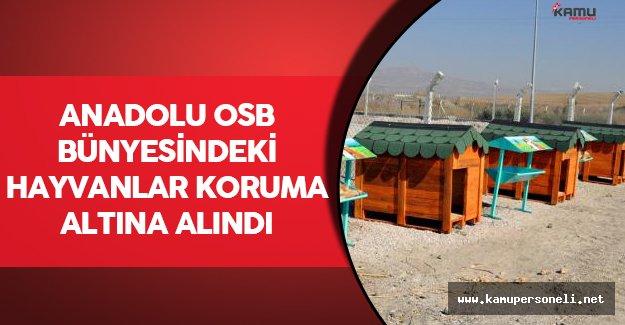 Anadolu OSB Bünyesindeki Hayvanlar Koruma Altına Alındı