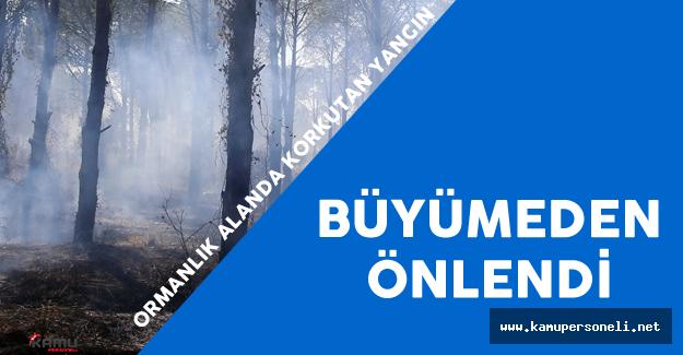 Antalya'daki Orman Yangını Korkuttu