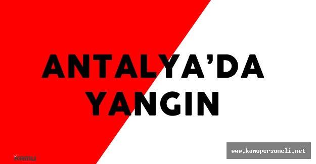 Antalya'daki Orman Yangını Söndürülmeye Çalışılıyor