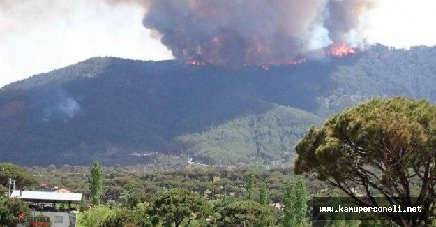Aydın'da Çıkan Yangında Karaçam Ormanları Zarar Gördü