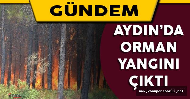 Aydın'da Orman Yangını Çıktı