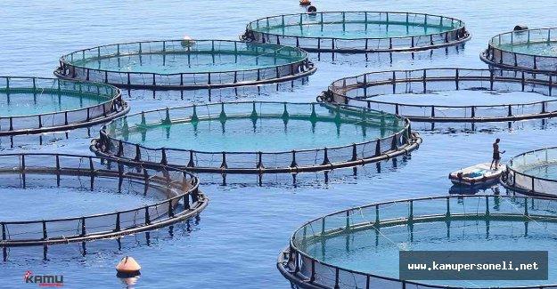 Ayvalık'ta Balık Çiftliklerine Tepkiler Artıyor