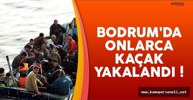 Bodrum'da Yunanistan'a Kaçmaya Çalışan 255 Kaçak Yakalandı !