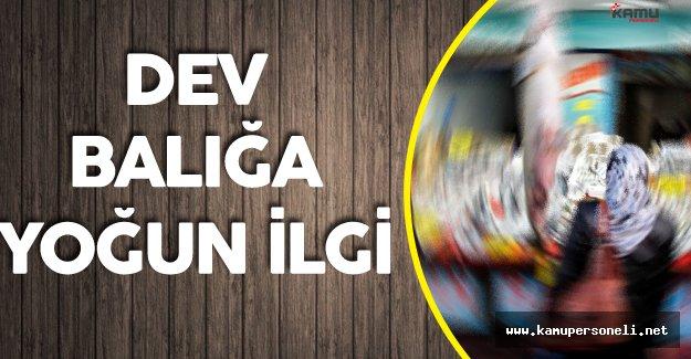 Elazığ'da Yakalanan Dev Balık Görenleri Şaşkına Çeviriyor