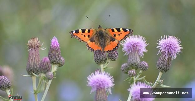 Kelebek Zengini İlimiz Keşfedilmeyi Bekliyor