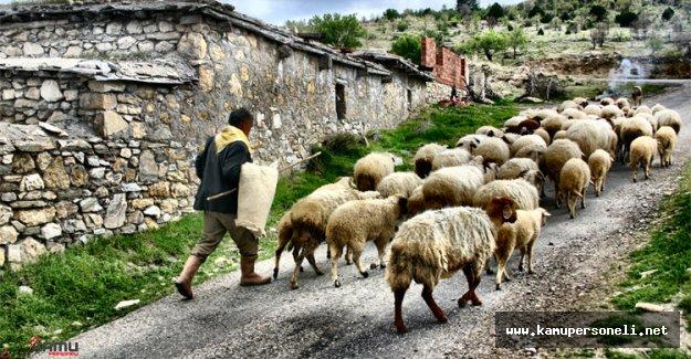 Konya'da Cinsel İlişki Teklifi İle Çobanın 27 Bin 700 Lirasını Çaldılar