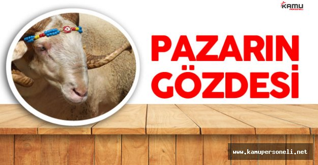 Kurban Pazarının Gözdesi Gırbiş'e İlgi Yoğun