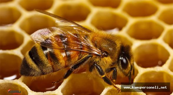Ramazanda Arı Ürünlerinin Tüketilmesi Direnci Arttırır