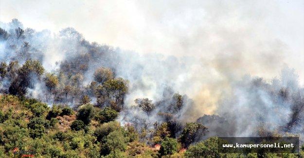 Son Dakika: Bodrum'da Çıkan Yangın Kontrol Altına Alındı