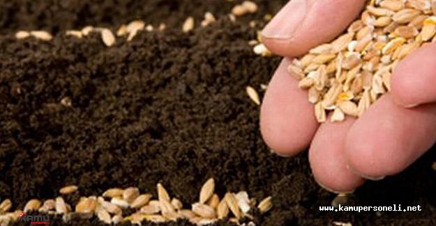 Tohum Üreticilerine Müjdeli Haber Tarımsal Araştırma Enstitüsünden Geldi