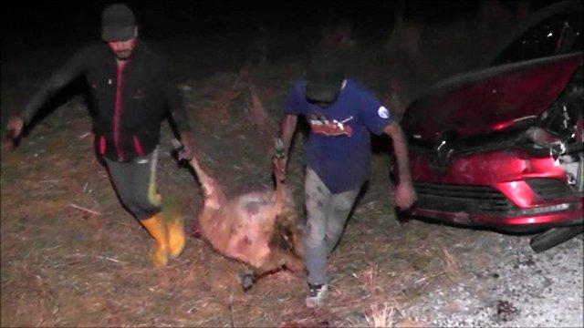 Tokat'ta feci bir kaza meydana geldi! Otomobil koyunları ezdi!