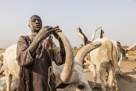 Güney Sudan'ın kral sığırları