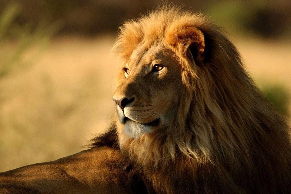 En İyi Kişilik Testi ! Resimdeki Hayvanlardan Hangisi Dikkatinizi Çekiyor !