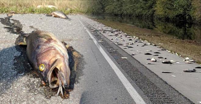 Florence Kasırgası Sonrasında Ortaya Çıkan Görüntüler
