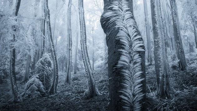 İçerisinde kaybolmayı isteyeceğiniz gizemli ormanlar