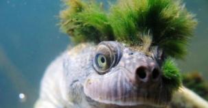 Hayvanlar Aleminin Daha Önce Hiç Görmediğiniz Kendine Has Tarzlı Canlıları