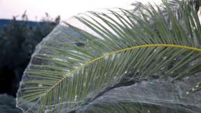 Yunanistan'da Sahili Kaplayan 300 Metrelik Örümcek Ağı