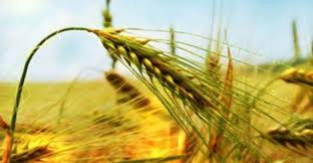 Genç Çiftçilere 30 Bin Lira Hibe Desteği Yapılacak
