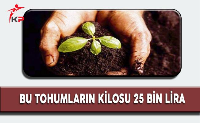 Bu Tohumların Kilosu 25 Bin Liradan Dünya'ya İhraç Ediliyor