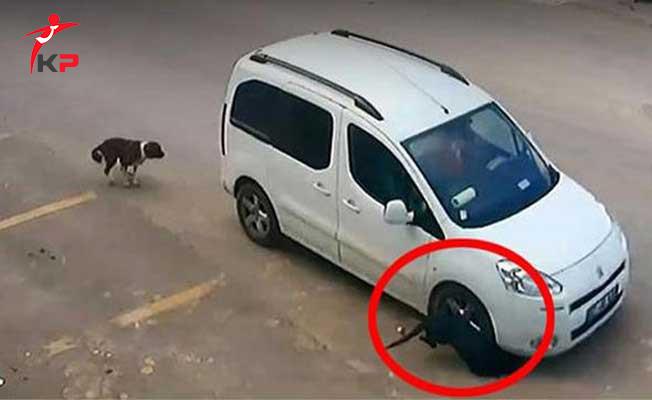 Antalya'da Köpekleri Kasten Ezen Sürücü Hakkında Karar Verildi