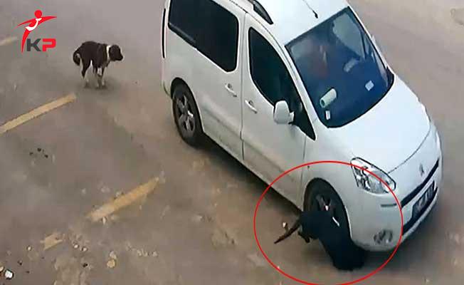 Köpeği Ezen Sürücü'nün Akıllara Durgunluk Veren İfadesi