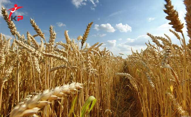 Türkiye İle Ukrayna Arasında Buğday Anlaşması