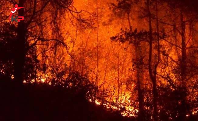 Eskişehir'de Orman Yangını! Yangın Kontrol Altına Alınamadı