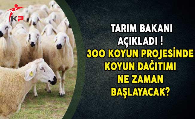 Tarım Bakanı Açıkladı! 300 Koyun Projesinde Koyun Dağıtımı Ne Zaman Başlayacak?