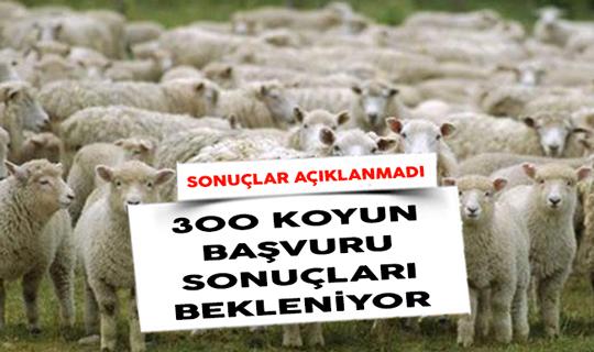300 Koyun Başvuru Sonuçları Bekleniyor! Neden Açıklanmadı?