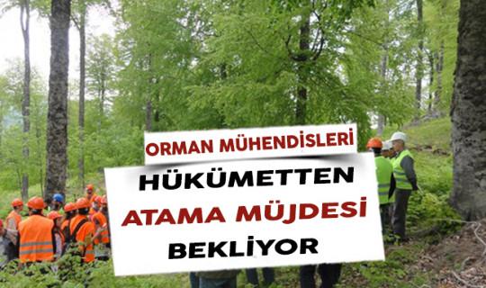 Orman Mühendisleri Hükümetten Atama Müjdesi Bekliyor