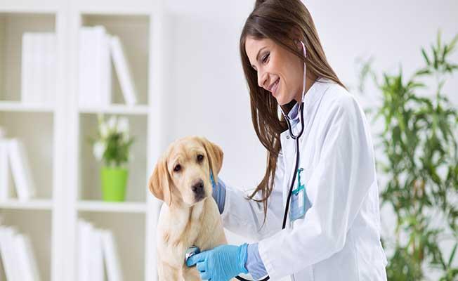 Veteriner Hekimliği Uzmanlık Eğitimi Yönetmeliği Resmi Gazete'de Yayımlandı