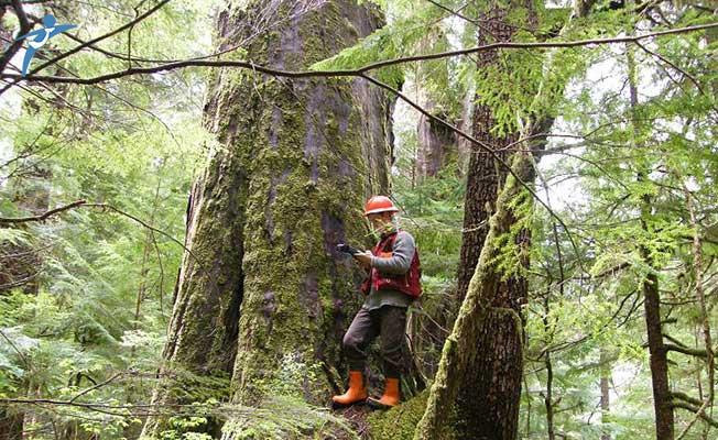 Orman Mühendisleri Merkezi Atamada Kadro Bekliyor