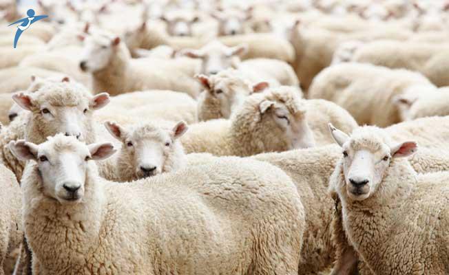 100 Günlük Eylem Planı Çerçevesinde Bayramdan Sonra 50 Bin Küçükbaş Hayvan Dağıtılacak