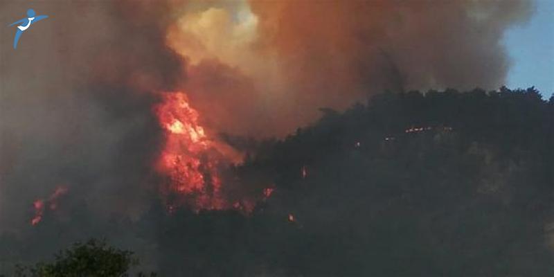 Kastamonu'da Korkutan Yangın: 20 Dönümlük Alan Kül Oldu