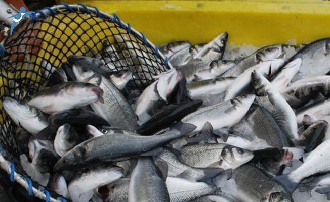 Kırmızı Etten Sonra Balık İçin Uyarı Yapıldı!