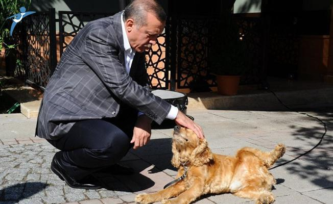 Cumhurbaşkanı Erdoğan: Hayvan Hakları Yasası Hala Neyi Bekliyor, Çıkartın Bir An Önce