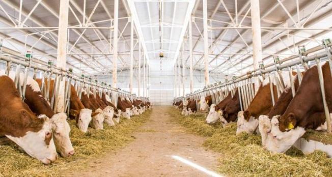 Hayvancılık Yatırımları İçin Yüzde 50 Hibe Desteği Verilecek