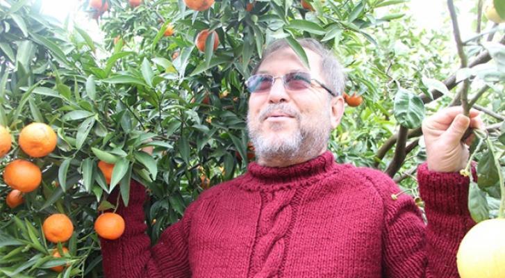 Antalya'da Bir ağaçta 4 ayrı meyve yetişti