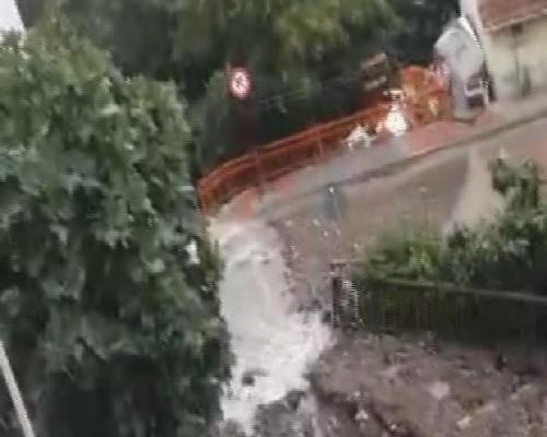 İstanbul Kağıthane'de meydana gelen su baskını nedeniyle bir çok hayvan telef oldu